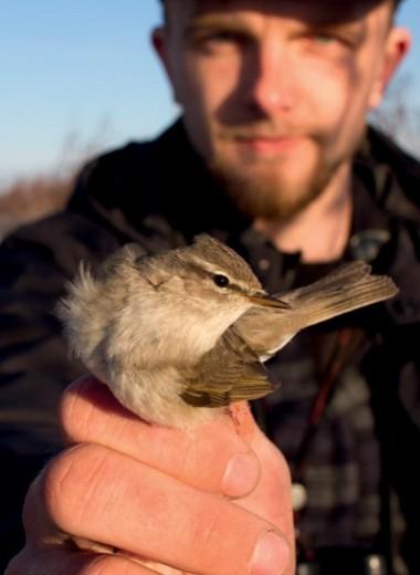 Длинный путь маленькой птички
