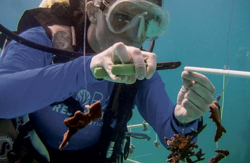 Кораллы: время и жизнь