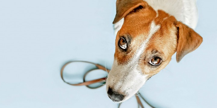7 причин завести собаку