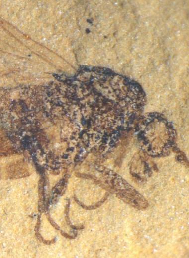 Хищные скорпионницы мелового периода