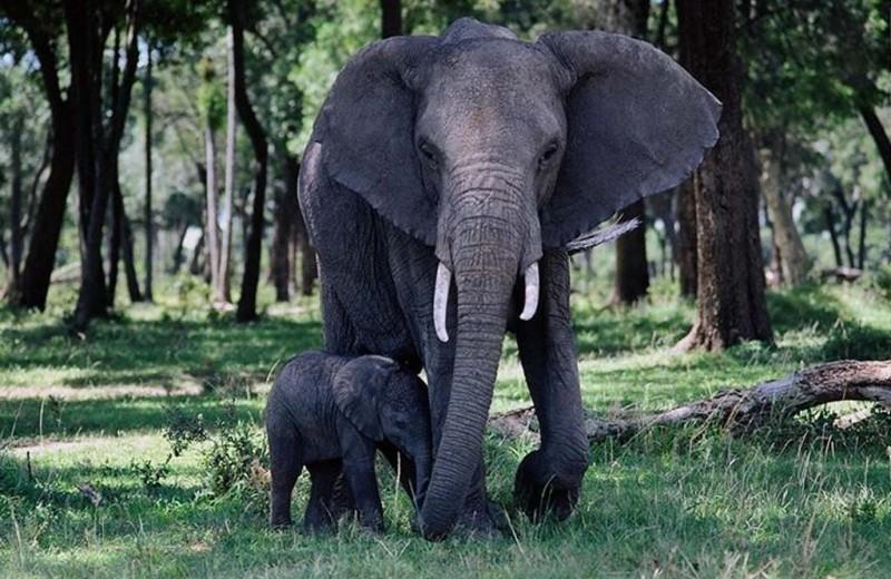 Генераторы ритма и размеры животных