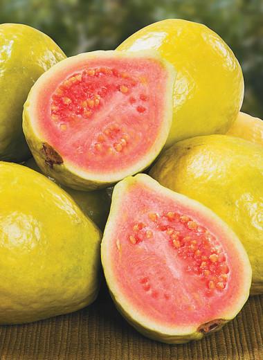 Гуайява, сладкий плод с экзотическим ароматом