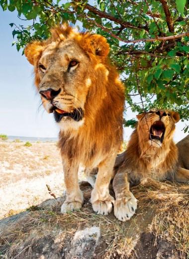 5 лучших зоопарков