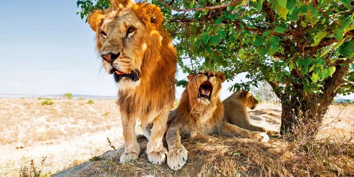 7 лучших зоопарков