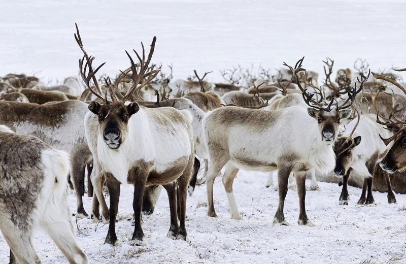 Чукотка: Северный полярный вдруг