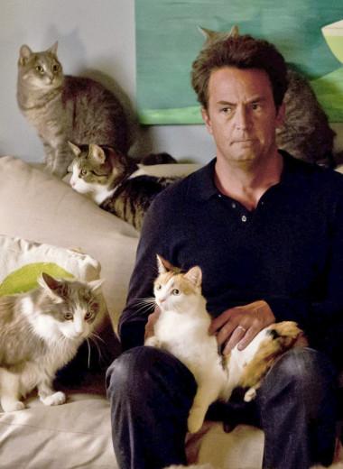 Код кота: 31 вопрос о главном
