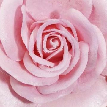 Вам цветы