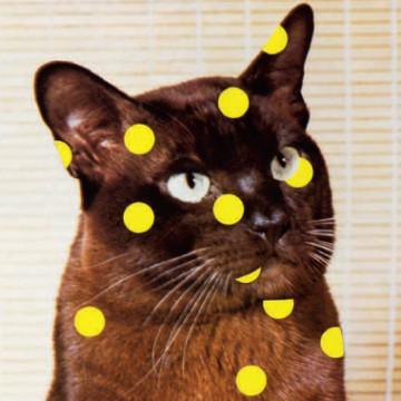 Еще кошек, пожалуйста