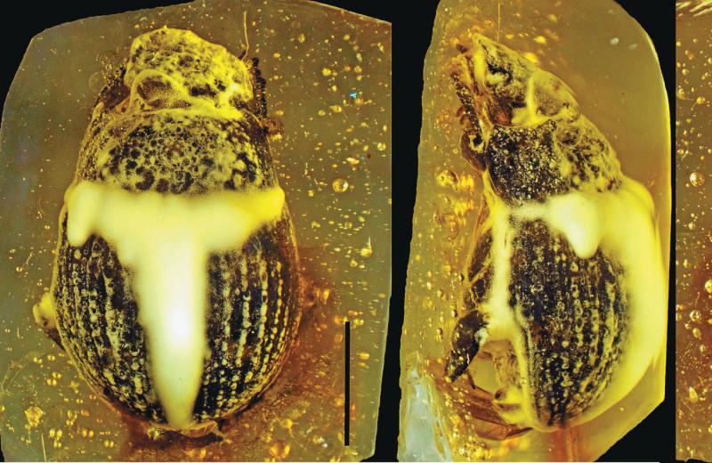 Жуки-навозники: 70 миллионов лет эволюции
