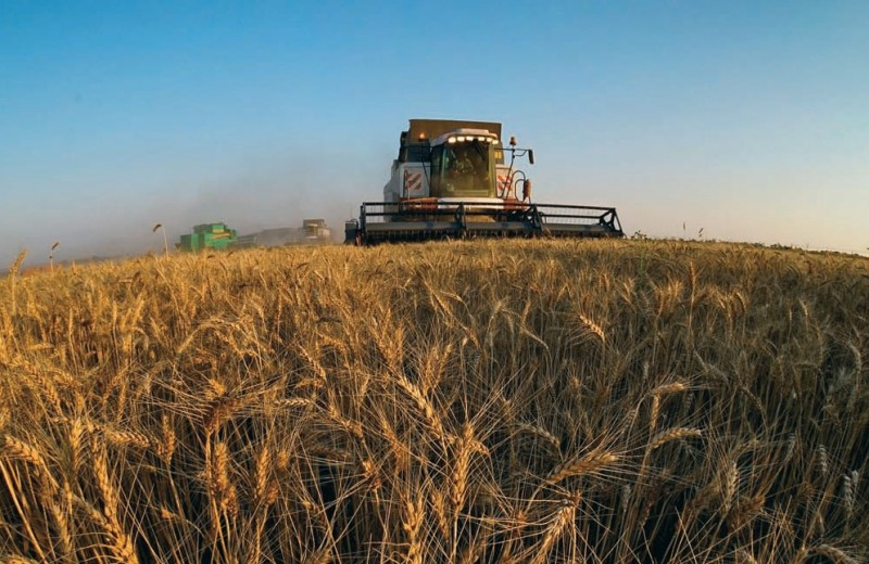 Теперь пришли за зерном