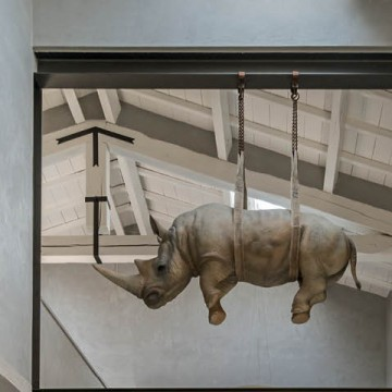 Носорог бодает рогом