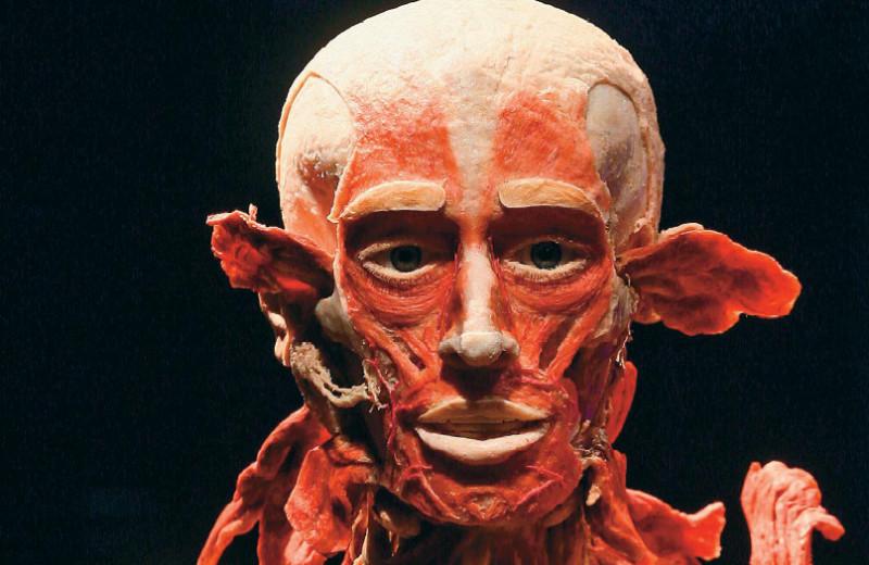 Тела, запластинированные Гюнтером Хагенсом: внутренний мир человека своими глазами