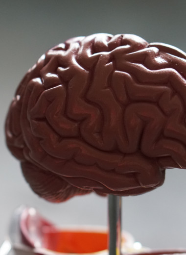 Чувство времени и мозг