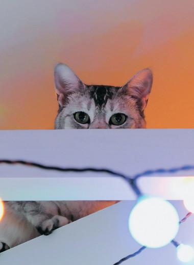 Электроны и котики