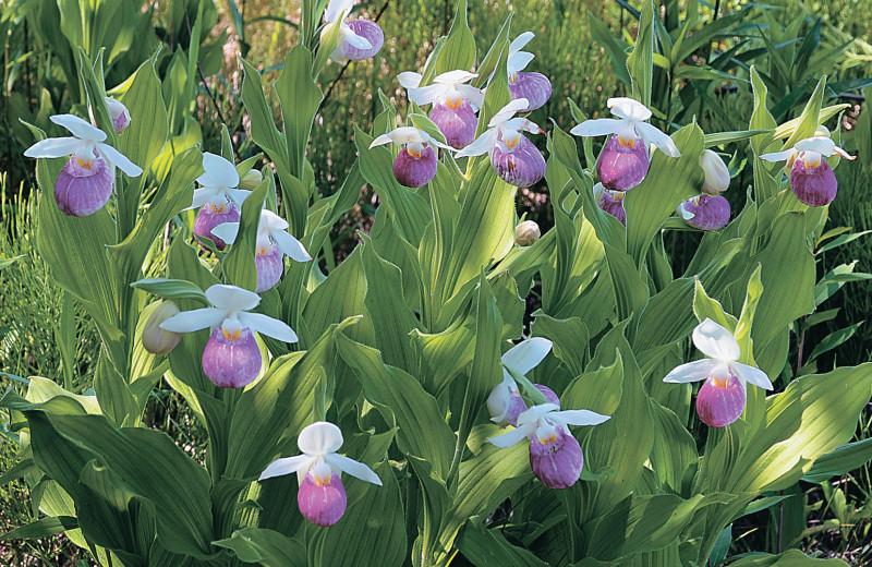 В саду цветут орхидеи
