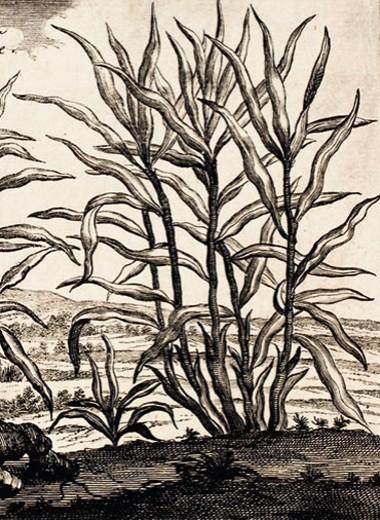 Щепотка имбиря