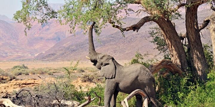 Как у слона за пазухой