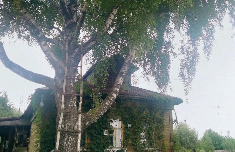 Последняя деревня Москвы. Как Терехово выжило внутри мегаполиса и что будет дальше