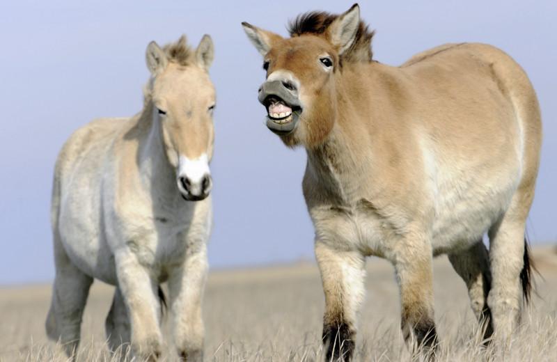 Лошадь, которой нет