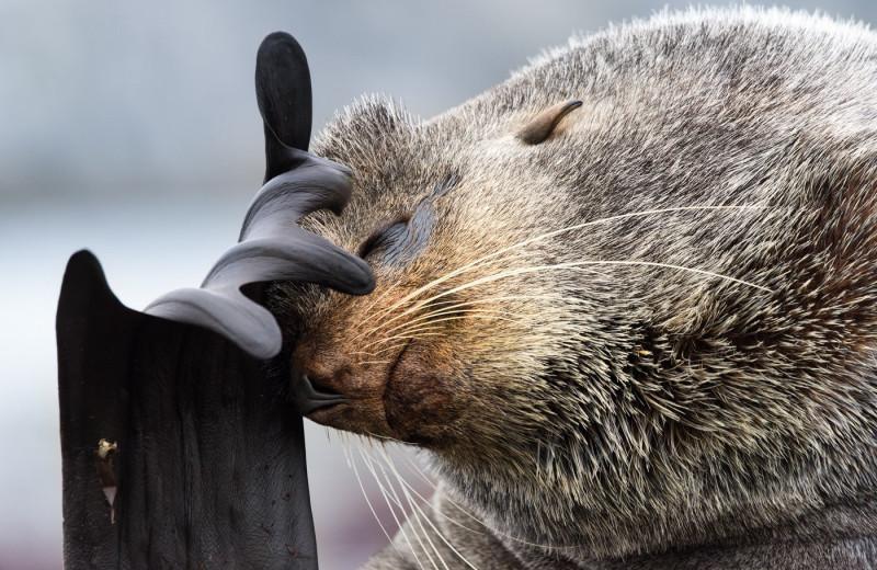 Почему многие морские животные плавают кругами?