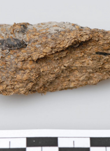 Палеофекалии из шахты в Австрии показали: европейцы пили пиво и ели сыр с плесенью ещё 2700 лет назад