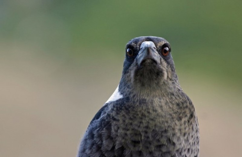 Голуби и вороны-свистуны лишились сна из-за городского освещения