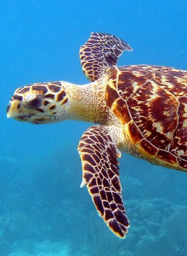 Торговля продуктами из морских черепах запрещена. Японии все равно