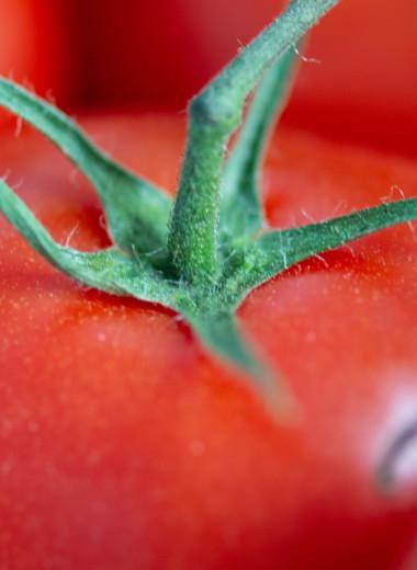 ГМО повсюду: самые странные примеры генной инженерии