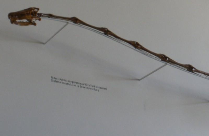 Древняя рептилия с невероятно длинной шеей оказалась морским хищником