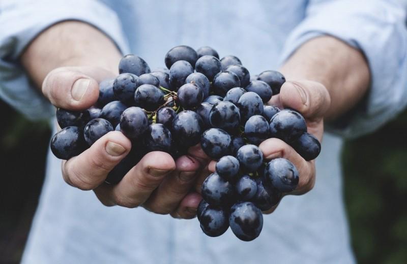 Что будет, если есть виноград целых два месяца (каждый божий день)