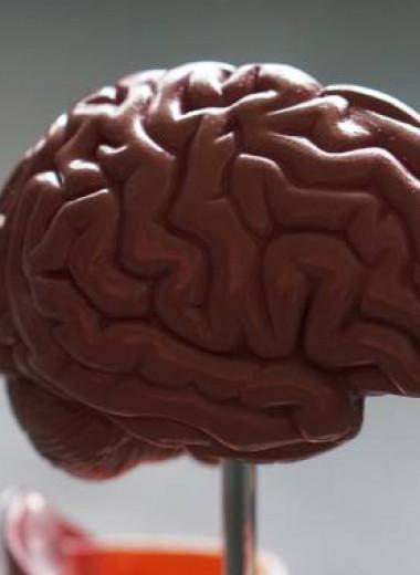 «Мозг — не для того, чтобы думать». Как на самом деле работает главный орган нашего тела