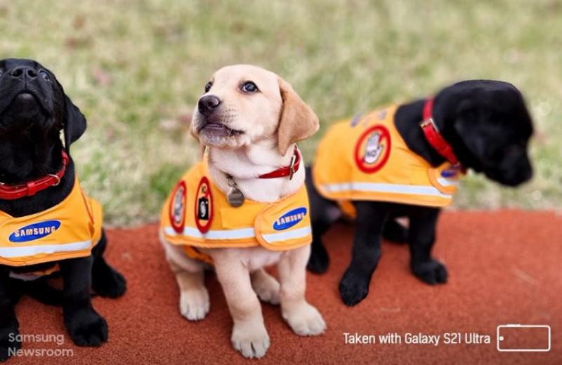 Из жизни собаки-поводыря: от рождения до выхода на пенсию