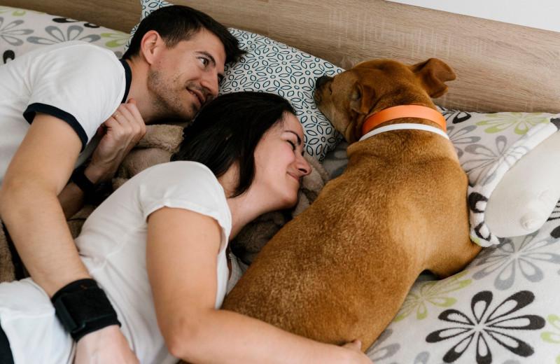 Что не стоит делать в постели, если с вами в спальне собака
