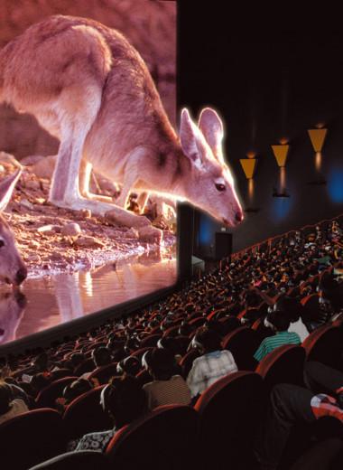 Как устроены кинотеатры IMAX?