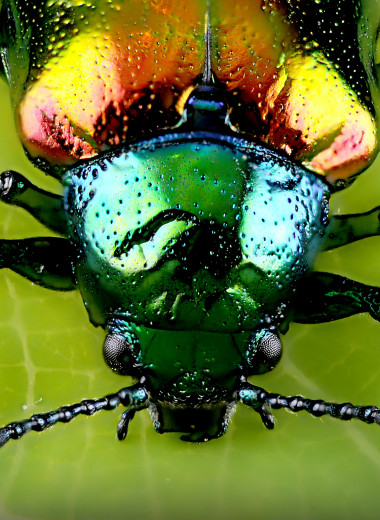 Копролиты жука из бирманского янтаря подтвердили гипотезу об эволюции опылителей