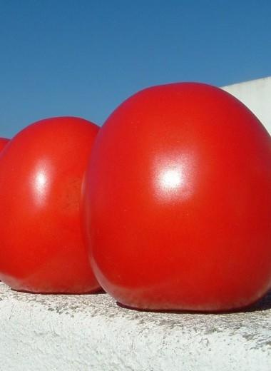 Как вырастить овощи-гиганты?
