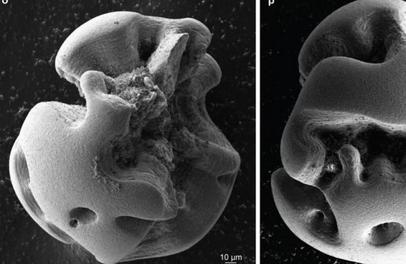 Хемосинтезирующие бактерии окислили марганец