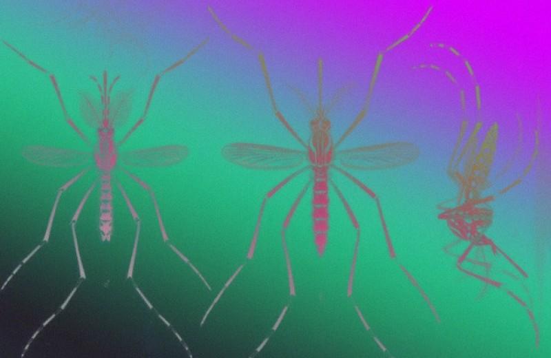 Нехватка воды заставила африканских комаров перейти на человеческую кровь