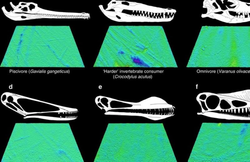 Палеонтологи реконструировали диету 17 родов птерозавров по трещинам на зубах