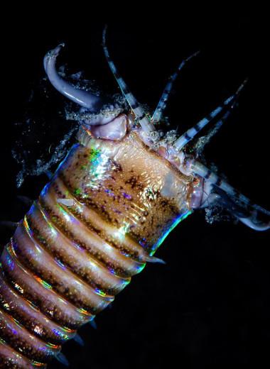 На Тайване нашли древнее логово гигантского хищного морского червя