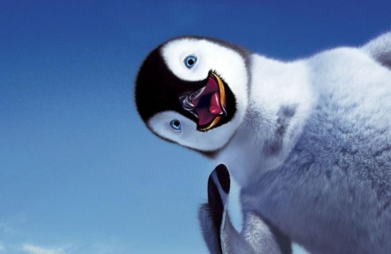 20 забавных фактов о пингвинах