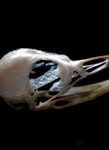 В Польше найдено странное захоронение: у ребенка во рту – череп птицы