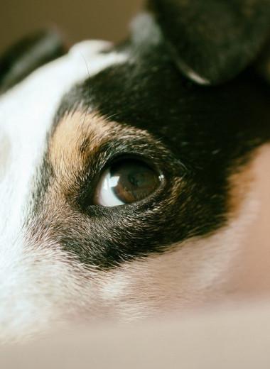 Собаки знают, когда мы их обманываем