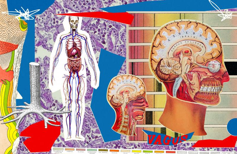 Что такое блуждающий нерв и зачем вам что-то о нем знать