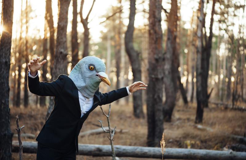 Почему никто не видел птенцов голубей и как они выглядят