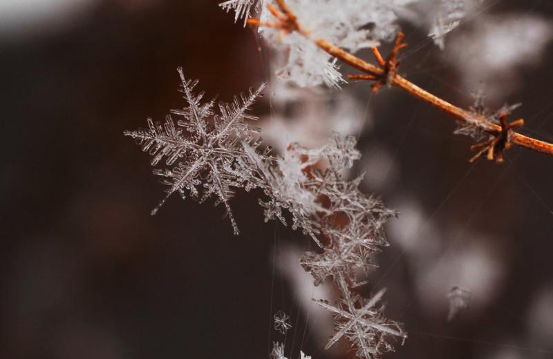 Одинаковые снежинки существуют