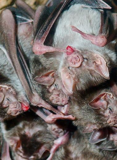 Обыкновенные вампиры подружились по-человечески