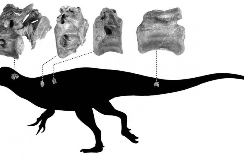 В Великобритании нашли новый вид динозавра с полыми костями