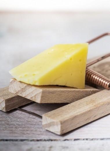 Сыр и еще 5 продуктов, вызывающих почти наркотическую зависимость