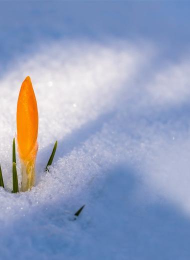 Температурные контрасты России: как зима сталкивается с весной